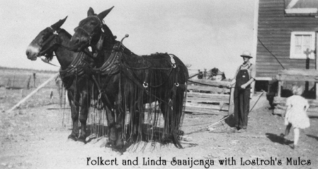 Folkert and Linda Saaijenga and Lostroh's Mules  1947
